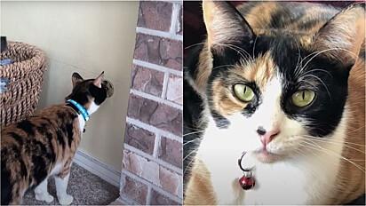 A gatinha mora com a sua família em Lake Oswego, Oregon (EUA).