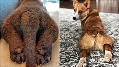 Por que os cachorros e gatos deitam com as patas esticadas/viradas?