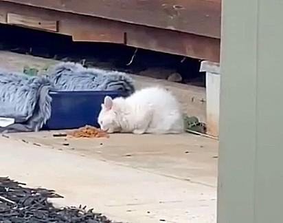 A gatinha foi alimentava por Alice e seu gato não se importou com a presença da nova felina na residência.