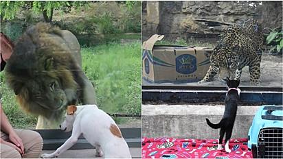 Durante a quarentena, os animais do abrigo da Liga de Defesa Animal do Texas foram levados para um passeio emocionante ao Zoológico de San Antonio.