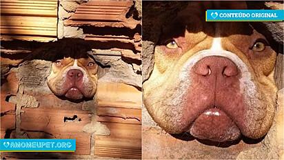 A cachorra vive com sua família em Campinas, São Paulo.
