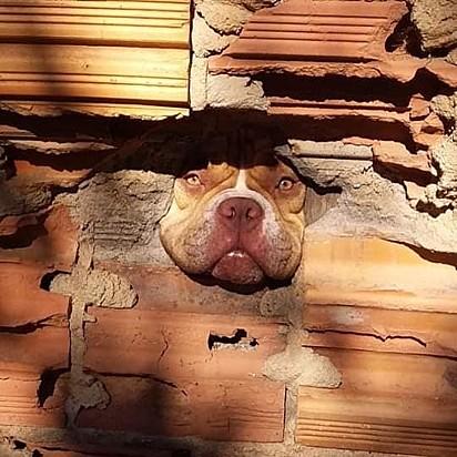 O vizinho se obrigou a mandar um wats para o dono da Zoe, pedindo a ele que conversasse com a cachorrinha sobre o hábito de fofocar.