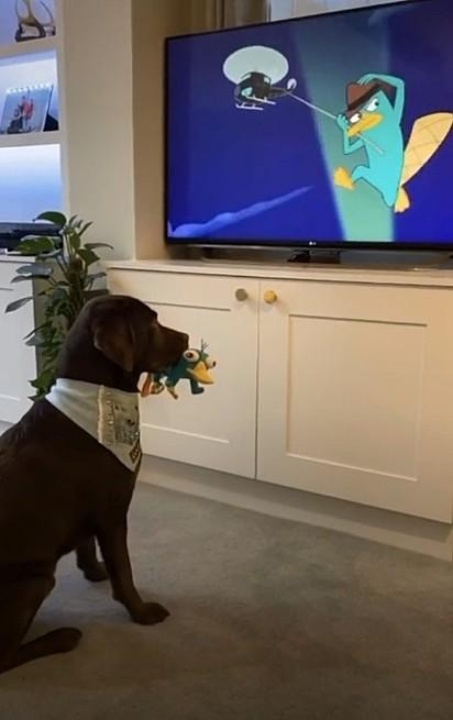 O labrador segura a réplica do mascote da série e senta em frente a TV para curtir um dos episódios do desenho.