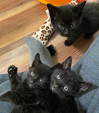 Os gatinhos foram nomeados de Fletcher, Olive e Mara.