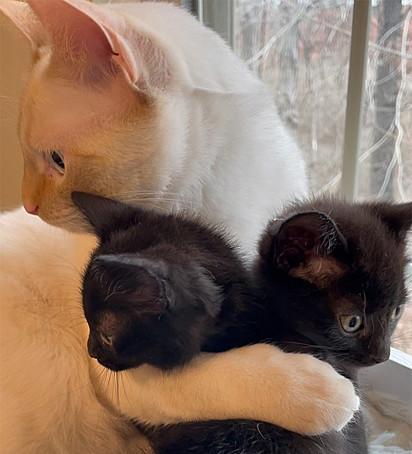 O gatinho Bear foi muito receptivo com os filhotes.