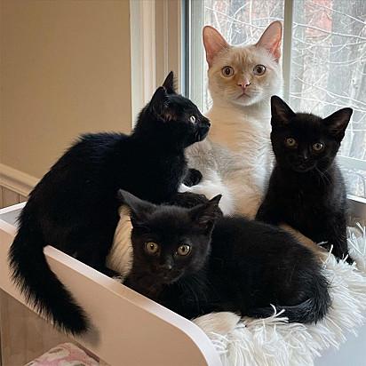Bear adora interagir com os gatinhos que passam pela casa de Jennifer. E com esses três filhotes não foi diferente.