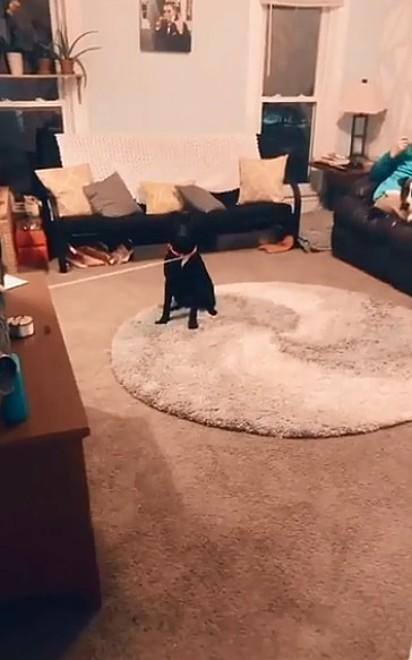 A cadela Jo fica atenta a sua dona que está preparando a brincadeira.