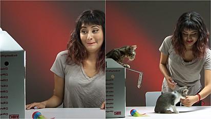Buzzfeed faz experiência em deixar felinos 1 semana com pessoas que não gostam de gatos.