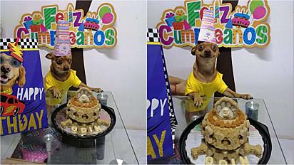 No início do mês de fevereiro a família decidiu homenagear o cão com uma linda festa de aniversário.