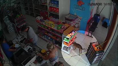 O cachorrinho entra no pet shop, pega despretensiosamente o petisco e sai.