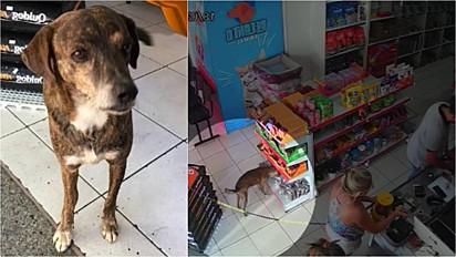 Vira-lata entra em pet shop de Nova Esperança, Paraná e furta um petisco.