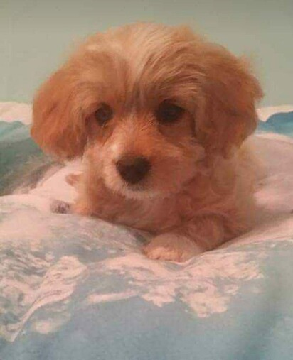 Karma, a cachorrinha que Will ganhou no seu aniversário de sete anos.
