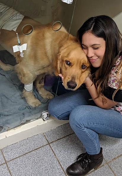 O golden retriever Cheddar precisou fazer um ultrassom emergencial em uma clínica veterinária na qual Fernanda estagiava.