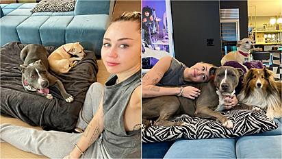 Há dois meses Miley Cyrus perdeu a sua cachorra para o câncer e recentemente adotou uma pit bull que a nomeou Angel.