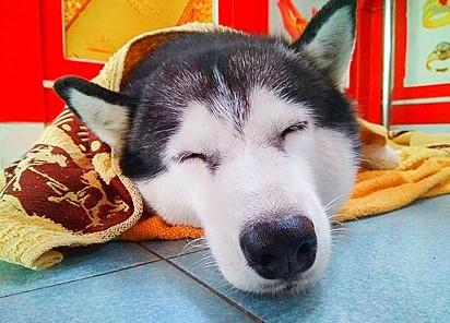 O cachorrinho Lucky é muito amável, a função de cão de guarda não é para o perfil dele.