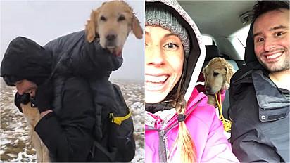 O casal resgatou a cadela no início do mês, nas montanhas de Wicklow, em Dublin (Irlanda).