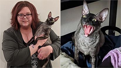 O gatinho vive com a sua dona em Green Bay, Wisconsin (EUA).