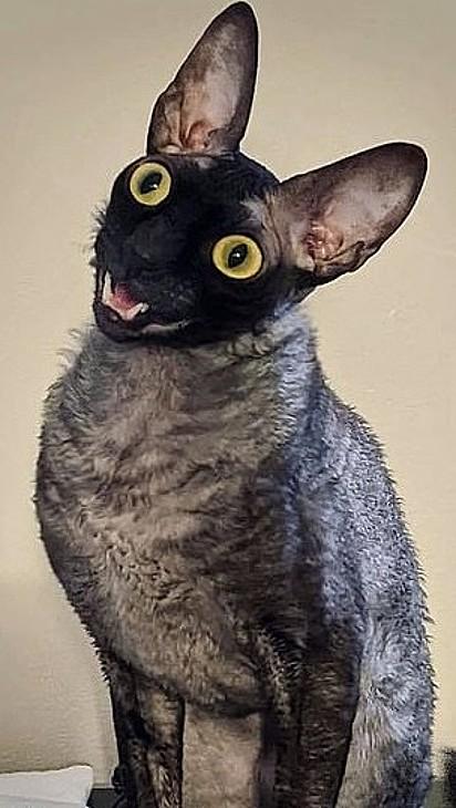 As expressões do gatinho assustam algumas pessoas.