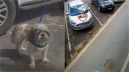 O cão Barney, de 3 anos, caiu do 2° andar foi levado ao médico veterinário e passa bem.