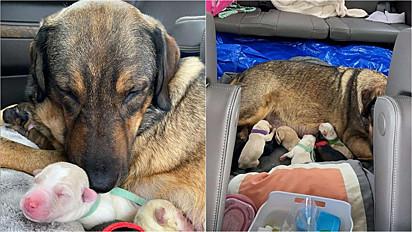 A cachorrinha deu à luz em um dia que faltou energia elétrica no Texas por causa de uma tempestade de neve.