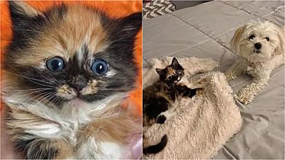 Gata filhote é adotada e conquista amizade de cadelinha da família.
