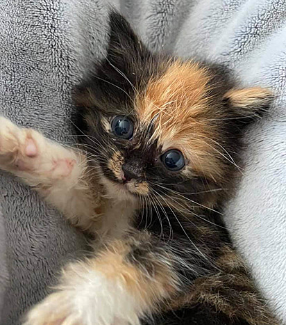 A gatinha tinha apenas cinco semanas de vida quando foi encontrada por transeuntes.