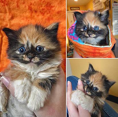 A gatinha muito simpática e amável encantou a todos no abrigo.
