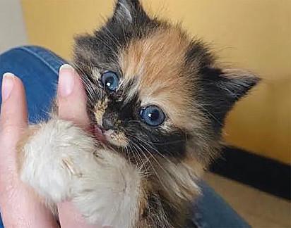 Mesmo com toda a doçura de Pocket, a gatinha foi rejeitada na primeira adoção.