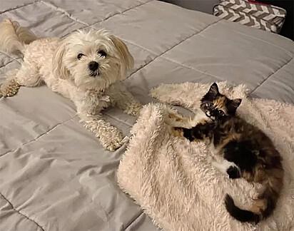Aos pouquinhos a gatinha tem conquistado o coração de Lexi.