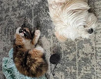 Agora Remi tem a missão de conquistar a sua nova irmã canina, Lexi.