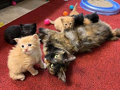Os filhotes foram adotados e Caki aguarda ser adotada por um lar amoroso