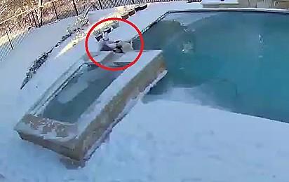 Quando a menina percebe que seu cão caiu na piscina rapidamente ela corre para salvá-lo.