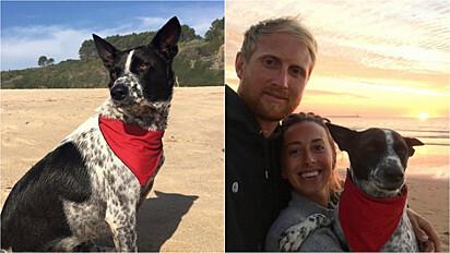 Donos ficam preocupados com o desaparecimento da cachorrinha da creche em Drayton Bassett, em Staffordshire, Inglaterra.