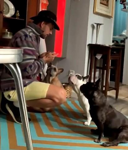 Ryan Fisher estava cuidando dos cães da cantora e atriz, enquanto Gaga está em Roma, Itália trabalhando em um novo filme.