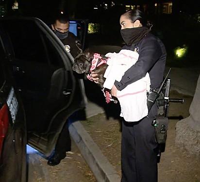 O cão Miss Asia foi posteriormente recuperado pela polícia.