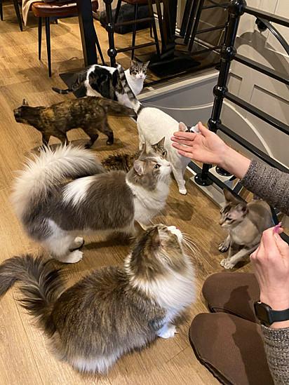 A cafeteria conta com a presença de nove gatinhos lindos.