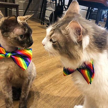 Os felinos animam os clientes tristonhos e alegram ainda mais os clientes felizes.
