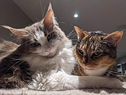 A presença dos gatinhos torna o ambiente acolhedor e familiar.