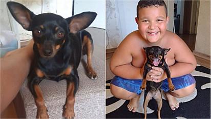 Depois de 5 dias de sofrimento, criança reencontra seu cachorrinho de estimação.