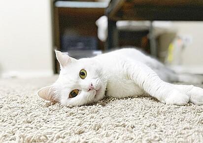 Ivory, de 10 anos, encanta a todos com seus lindos olhos heterocromáticos.