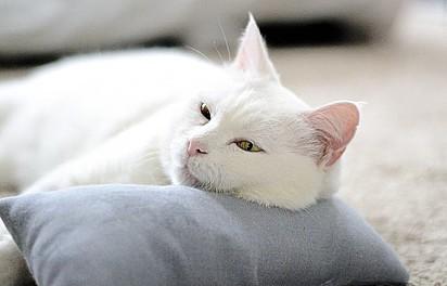 A gatinha foi adotado por Gabriela Carvalho em Alberta, Canadá.