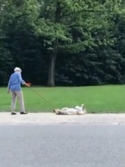 A idosa puxa gentilmente a coleira do cachorro, mas ele não se move.