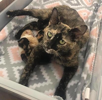 Dois dias do seu resgate, a gatinha deu à luz quatro lindos filhotinhos.