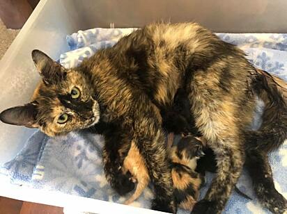 Os gatinhos nasceram lindos e saudáveis.