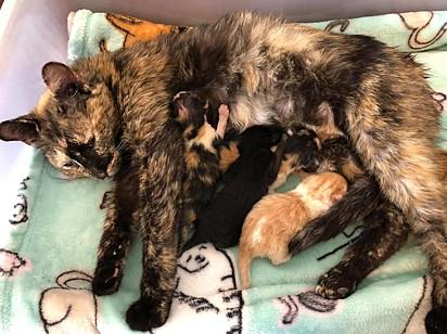 Os gatinhos foram amamentados com a ajuda dos voluntários, pois a gatinha não produziu leite suficiente.