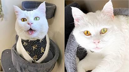 A cor dos olhos da gatinha varia conforme o clima, ficando entre verde e amarelo neon para amarelo brilhante e laranja.