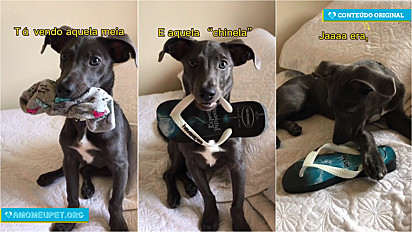 Cachorro faz sucesso no TikTok por fazer paródias de músicas conhecidas.