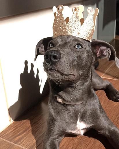 O cachorro Hunter, um cãozinho cantor.