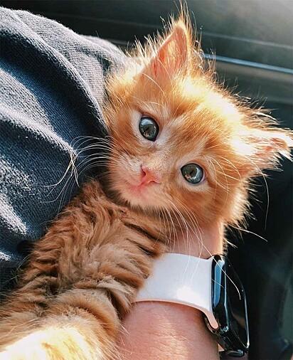A gatinha foi adotada por Jennifer Kubba.