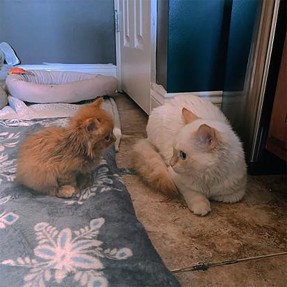 A pequena Cheese teve a missão de conquistar o amor de sua irmã Hank.